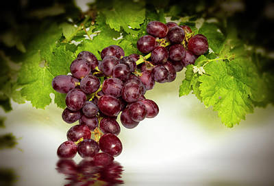 Photograph - Krissy Gold Grapes by David French