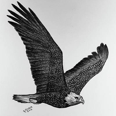 Buzzard Drawing - A Hawk Drawing by Khudair Alshehi