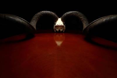 Photograph - Kudu Curls by David Andersen