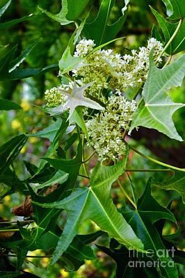 Photograph - Kukui Blossom by Craig Wood