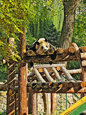 Kung Fu Panda. Deep Sleep. Original by Andy Za