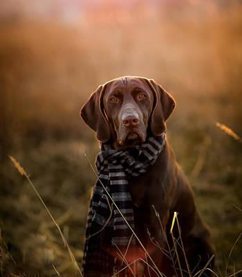 Dog Trots Photograph - Cerman Pointer by Elena Kovalenko