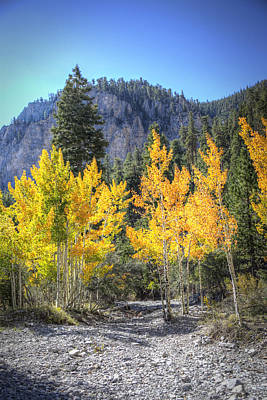 Photograph - Kyle Canyon Aspen by Robert Melvin
