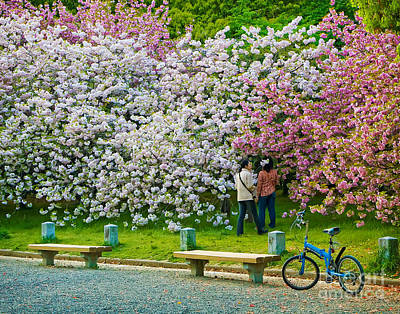 Photograph - Kyoto Cherry Blossoms by Waterdancer