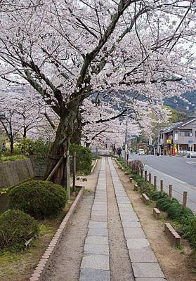Kyoto In Bloom Art Print