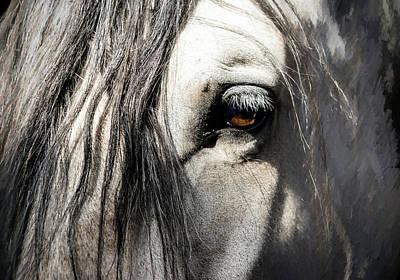 Photograph - Kyra's Soul by Lynn Palmer