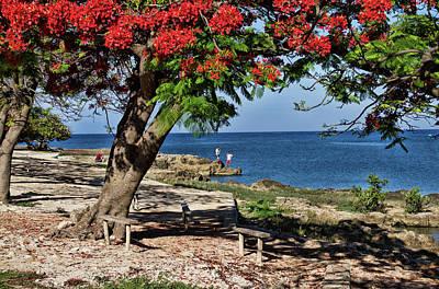 Photograph - La Boca Beach by Sandra Anderson