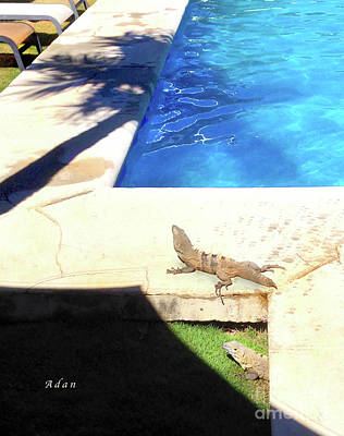 Photograph - la Casita Playa Hermosa Puntarenas Costa Rica - Iguanas Poolside by Felipe Adan Lerma
