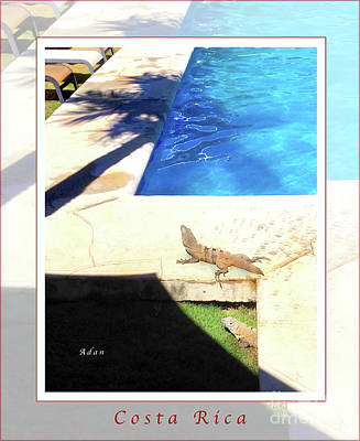 Photograph - la Casita Playa Hermosa Puntarenas Costa Rica - Iguanas Poolside Greeting Card Poster by Felipe Adan Lerma