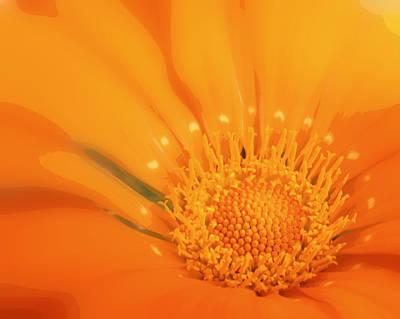 La Fleur D'orange Art Print