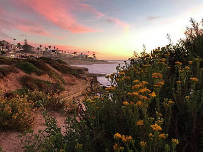 Photograph - La Jolla Beach Flowers by Joe White