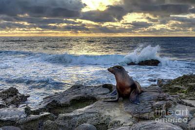 Photograph - La Jolla Sea Lion by Eddie Yerkish
