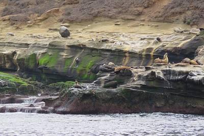 Photograph - La Jolla Sea Lions by Keith Stokes