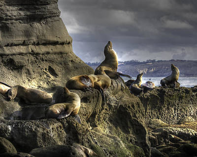 Photograph - La Jolla Seals by Dusty Wynne
