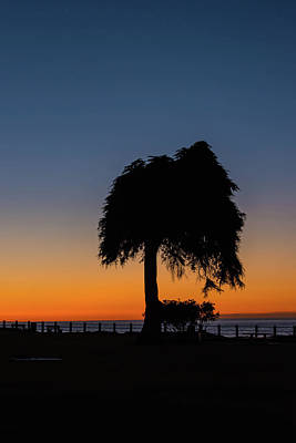 Photograph - La Jolla Tree Silhouette by Bruce Pritchett