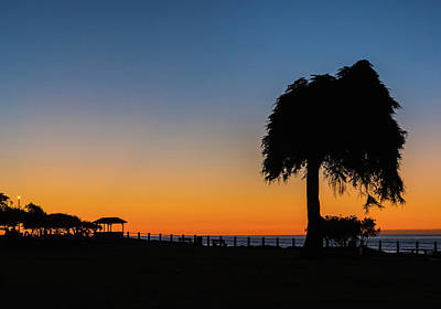 Photograph - La Jolla Tree Silhouette Img 3 by Bruce Pritchett