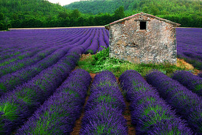 Lavender Digital Art - La Lavande by John Galbo