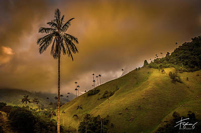 Photograph - La Palma Del Cocora by Francisco Gomez