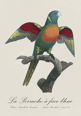 Birds Painting - La Perruche A Face Bleue - Restored 19th Century Parakeet Illustration By Jacques Barraband  by Jose Elias - Sofia Pereira