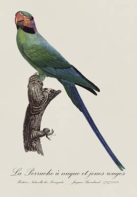 Love Birds Painting - La Perruche A Nuque Et Joues Rouges - Restored 19th Century Parakeet Illustration By J. Barraband by Jose Elias - Sofia Pereira