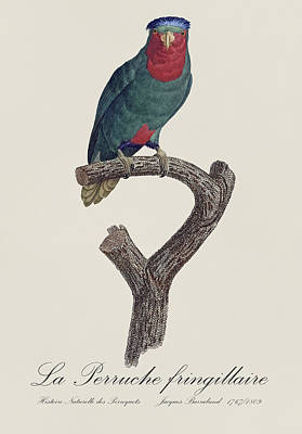 Parrot Painting - La Perruche Fringillaire - Restored 19th Century Parakeet Illustration By Jacques Barraband  by Jose Elias - Sofia Pereira