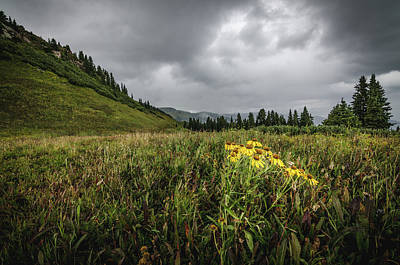 Photograph - La Plata Wildflowers by Margaret Pitcher