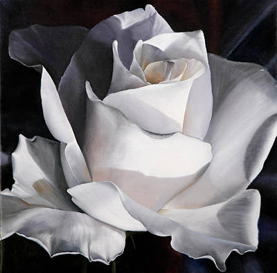 Still Life Royalty-Free and Rights-Managed Images - La Rosa Bianca by Guido Borelli