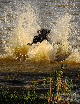 Water Retrieve Photograph - Lab At Work by Robert Frederick