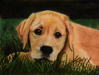 Pastel - Lab Puppy by Vicky Path