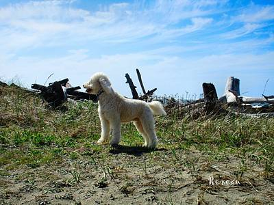 Photograph - Labradoodle-b by Sadie Reneau