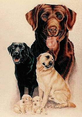 Drawing - Labrador Family by Barbara Keith