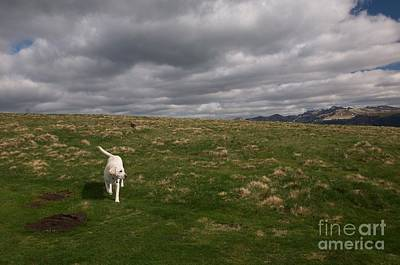 Photograph - Labrador In French Countryside by Louise Fahy