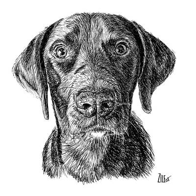 Digital Art - Labrador Retriever @abbeylovesringo by ZileArt