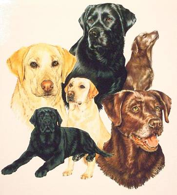 Drawing - Labrador Retriever by Barbara Keith