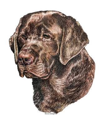 Chocolate Lab Drawing - Labrador Retriever, Chocolate Lab by Kathleen Sepulveda