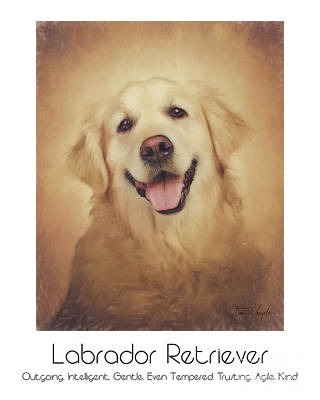 Labrador Digital Art - Labrador Retriever Poster by Tim Wemple