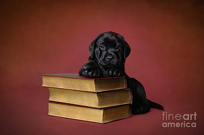 Photograph - Labrador Retriever Puppy With Books by Waldek Dabrowski