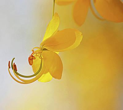 Sonora Photograph - Laburnum by Ana Encinas