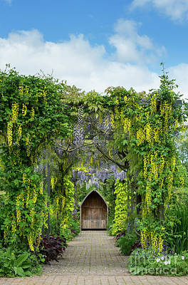 Photograph - Laburnum And Wisteria Archway by Tim Gainey