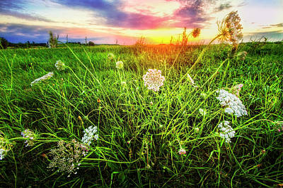 Photograph - Lace At Sunset by Debra and Dave Vanderlaan