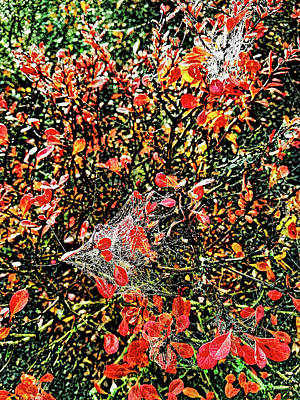 Photograph - Lace Autumn by Sergey  Nassyrov