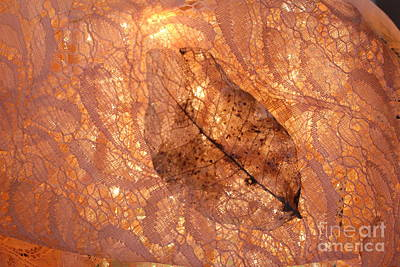 Photograph - Lace By Nature And Cloth by Marie Neder