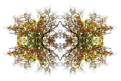 Lace Art Print by Debra and Dave Vanderlaan