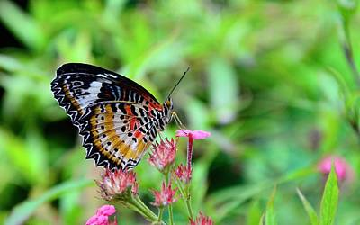 Photograph - Lace Wing Butterfly by Corinne Rhode