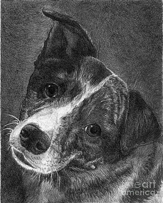 Cattle Dog Drawing - Lacey by Faithful Faces Pet Portraits