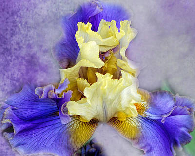 Photograph - Lacy Iris by TnBackroadsPhotos