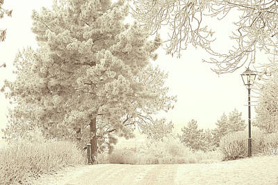 Photograph - Lacy Lane. Gentle Winter by Jenny Rainbow