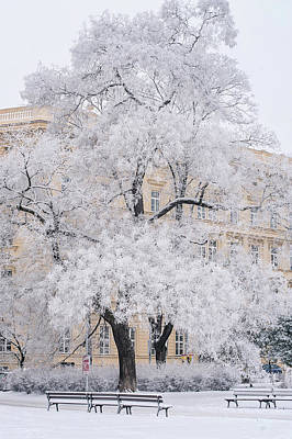 Photograph - Lacy Tree. Brno Winter by Jenny Rainbow