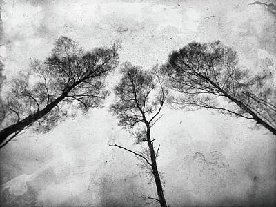 Photograph - Ladies Of The Woods by Karen Stahlros