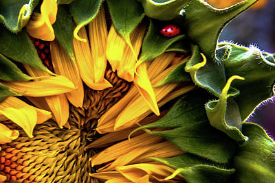 Photograph - Lady And The Sunflower  by Ryan Smith